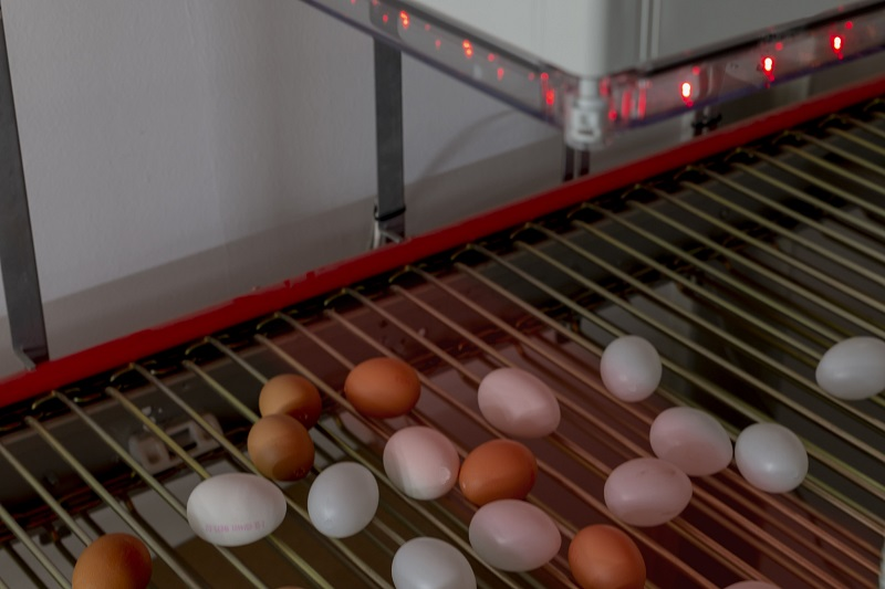 insensiv Landwirtschaft EggCam